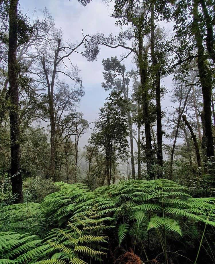 Bosque en las Cascadas de Paraiso Puebla